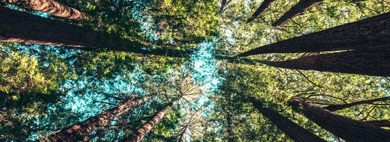 Las principales obligaciones medioambientales para las empresas